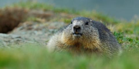 3 Common Critters You May Encounter This Fall, Miami, Ohio