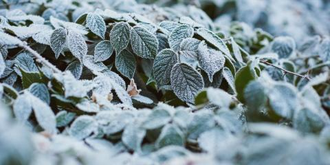 4 Garden Center Tips to Prepare for Winter, Quaker City, Ohio