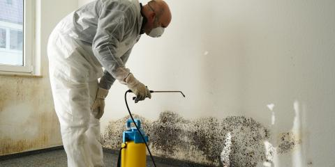 Everything Employers Should Know About Mold, Weathersfield, Vermont