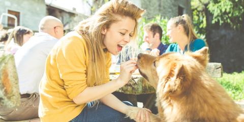Which Human Foods Are Good for Dogs?, Amsterdam, Virginia