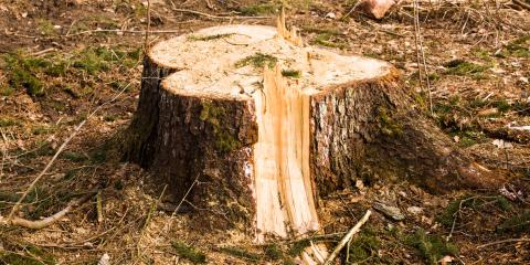Why Tree Removal Services Should Include Stump Removal, Midland City, Alabama