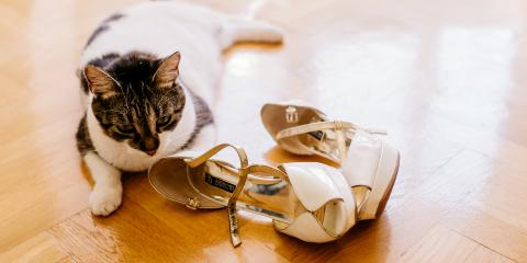 Why Do Cats Love Shoes So Much?, Jefferson, Ohio