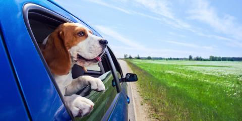 How to Navigate Moving With Pets, Fairfield, Ohio