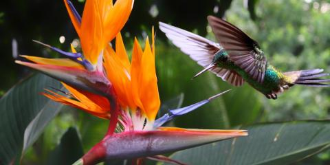 Lawn & Garden Experts Offer 4 Tips for Creating a Lush Tropical Landscape , Ewa, Hawaii