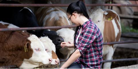 What You Need to Know About Showing Livestock, Seventy-Six, Iowa