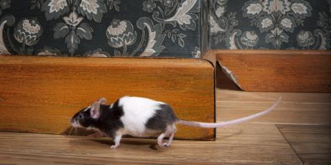 Pest Control Experts Give 3 Tips to Help Keep Rodents Away From the Home, Lodi, California