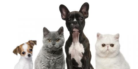 Petpallooza, Pet Grooming, Services, Mountain Home, Arkansas