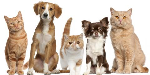 3 Benefits of Taking Your Pet to Yearly Veterinarian Visits, Columbia, Missouri