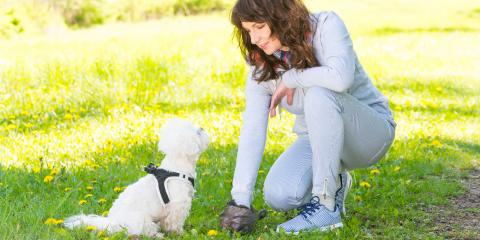 3 Tips to Help Dog Owners Avoid Back Pain, Dardenne Prairie, Missouri