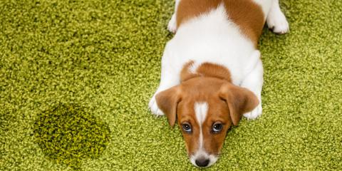 3 Health Problems Pet Stain Removal Prevents, Chesterfield, Missouri