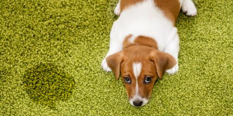 3 Easy House Cleaning Tips to Keep Pet Odors at Bay, Bronx, New York