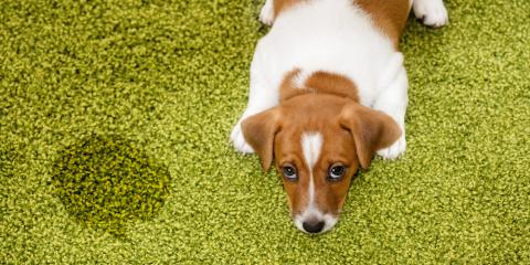 Carpet Cleaning Company Shares 3 Tips to Keep Your Dog From Peeing in the House, Texarkana, Texas