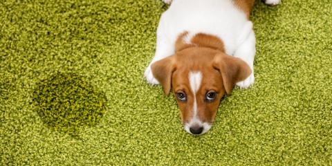 How to Get Pet Smells Out of the Carpet, Green, Ohio