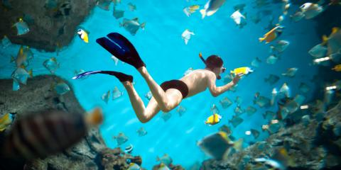 4 Aquatic Creatures to Look For While Snorkeling, Honolulu, Hawaii