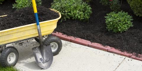 3 Key Winter Landscaping Tips to Keep Your Yard Healthy All Season Long, Batesburg-Leesville, South Carolina