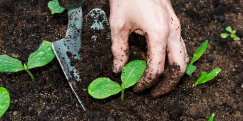 Can You Grow Plants Over Your Septic Tank?, Coldwater, Mississippi