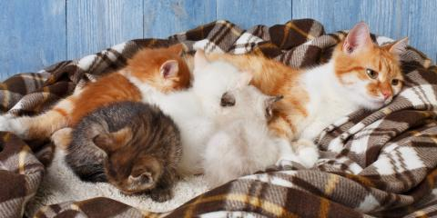 Reproductive Veterinarian Provides 4 Pet Pregnancy Care Tips , Hilton, New York