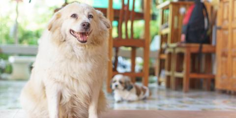 3 Reasons Your Dog Has Bad Breath, Orange Beach, Alabama