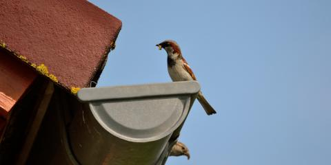 3 Ways to Prevent Birds From Nesting in Your Gutters, Holmen, Wisconsin