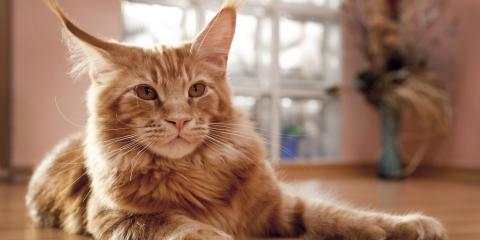 7 Cat Behaviors That Signal Health Problems, Hilton, New York