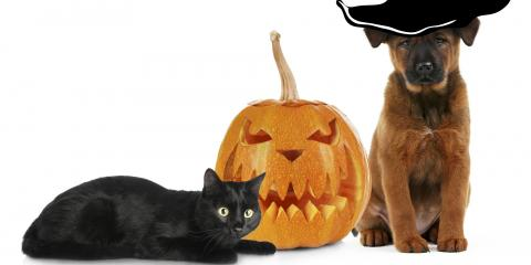 Kentucky's Pet Boarding Center Shares Some Halloween Safety Tips for Your Pets, Newport-Fort Thomas, Kentucky