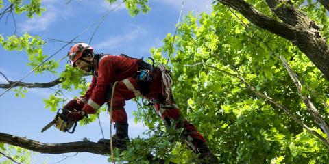 3 Benefits of Tree Pruning , De Motte, Indiana