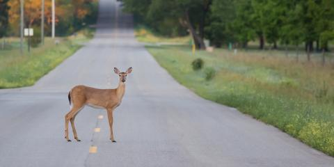 4 Ways to Avoid Deer Collisions, David City, Nebraska