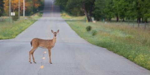 Auto Repair Shop Offers 3 Tips for Avoiding Deer on the Road, Lincoln, Nebraska