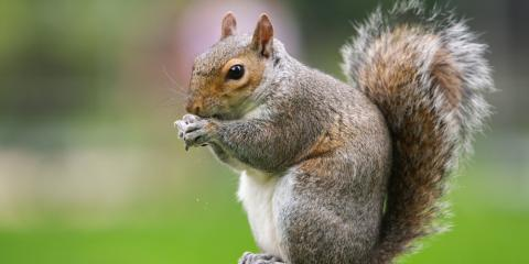 3 Ways to Prevent Roof Damage Caused by Animals, Waynesboro, Virginia