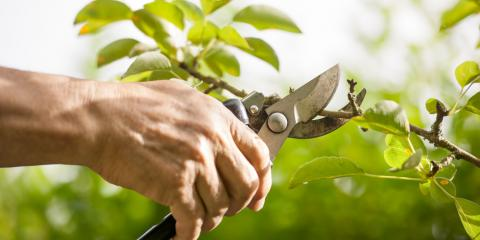 3 Reasons Property Managers Need Tree Pruning Services, Henrietta, New York