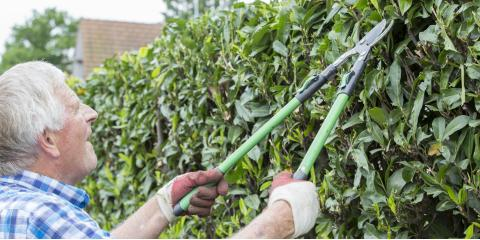 How to Trim Shrubs Safely, Chewelah, Washington