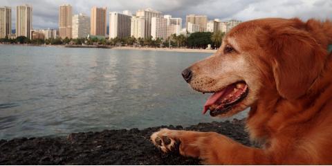 "What's Considered a ""Dangerous Dog"" in Hawaii?, Honolulu, Hawaii"