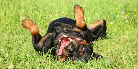 Keep Your Dogs Healthy This Summer With These Pet Care Tips, San Marcos, Texas