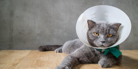 How to Care for a Pet's Stitches After Spaying or Neutering, Maui County, Hawaii