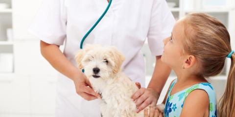 Pet Care Tips From Your Veterinarian to Consider This Winter, Statesboro, Georgia