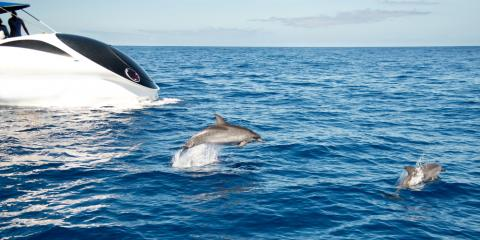 Why Dolphin Watching in the Wild Is a Wonderful Experience, Ewa, Hawaii