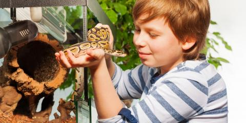 4 Pet Snake Care Tips from Veterinarians , Fairport, New York