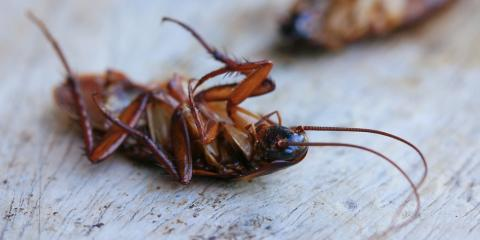 3 Signs You Need to Call A Roach Control Service, Dothan, Alabama