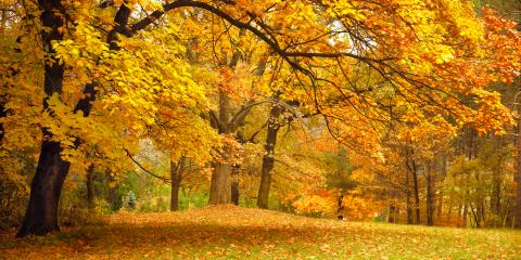 3 HVAC Tips for Combating Fall Allergies, Mount Vernon, Ohio