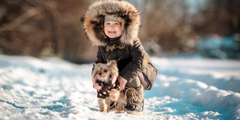 3 Ways to Keep Your Dog Warm This Winter, Manhattan, New York