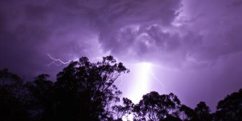 3 Steps to Take If Your Tree Is Struck by Lightning, Crescent, Wisconsin