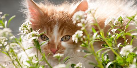 What Garden Plants Are Harmful to Pets?, Texarkana, Texas