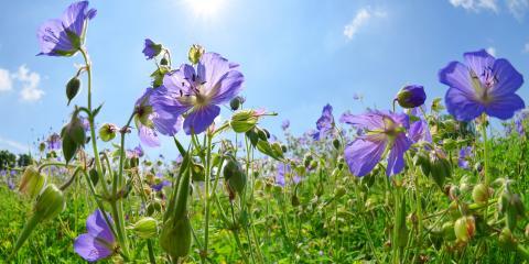 Which Perennials Grow Best In Ohio Gardens?, Colerain, Ohio