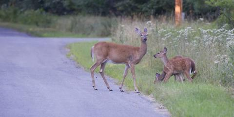 How to Avoid an Auto Collision With Animals and Other Roadblocks, East Rochester, New York