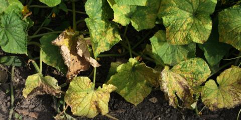 Landscaping Experts Reveal How to Stop 3 Common Summer Plant Diseases, Golden Valley, Minnesota