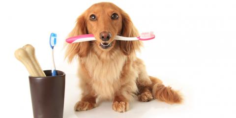NC Veterinarian Offering 15% Off Pet Dental Cleanings, High Point, North Carolina