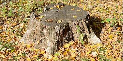 5 Reasons You Need Tree Stump Removal, Wiota, Wisconsin