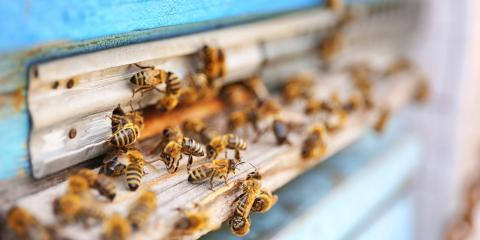 The Do's & Don'ts of Bee Removal, Newport, Ohio