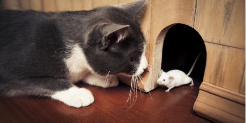 3 Top Home Rodent Control Tips, Brea, California