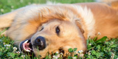 Your Guide to CBD Oil for Animals, Ewa, Hawaii